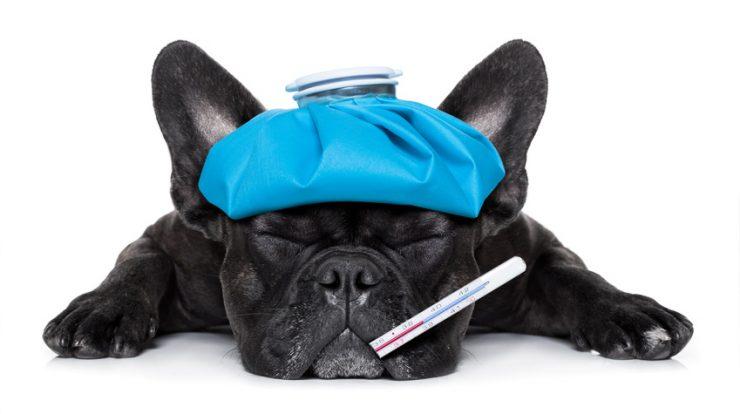 Tarif assurance chien